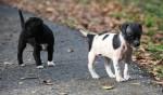 2012-12-25GrytzBarley_2945