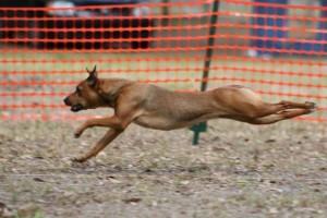 Fyji running LC